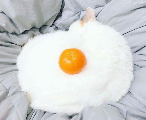 Подозрительно выглядящая яичница и фотожабы на неё (15 фото)