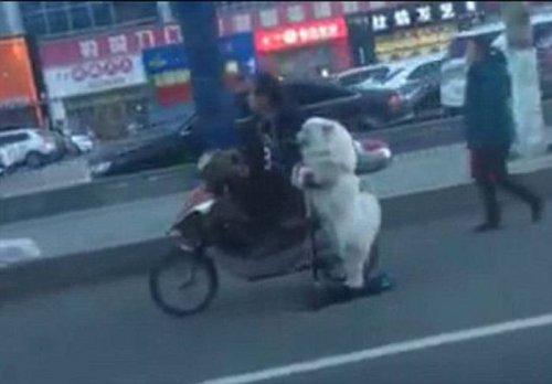 Тем временем на дорогах Китая (24 фото)