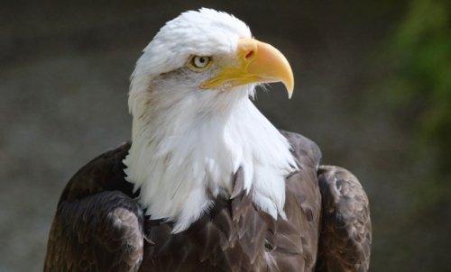 Топ-25: Интересные факты про орлов, которые могут изменить ваше представление о них