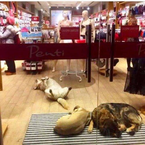Сильнейший за последние годы снежный буран разбушевался в Стамбуле, и вот как жители города помогают бездомным животным (9 фото + видео)