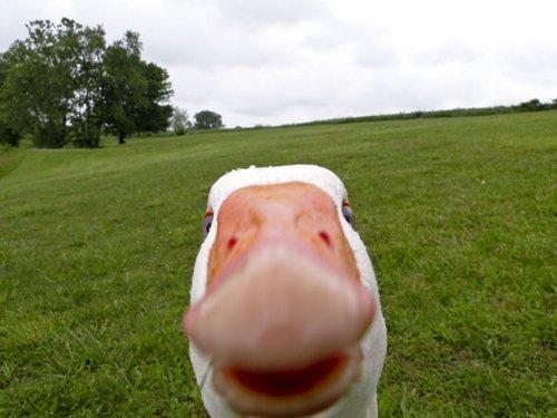Животные, которые любят селфи (37 фото)