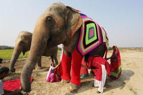 В Индии вяжут тёплую одежду для замерзающих слонов (6 фото)