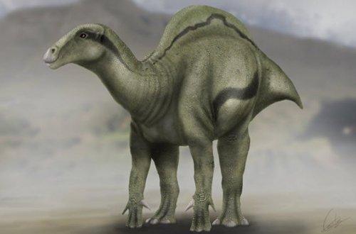 Топ-10: Необычные недавно обнаруженные виды животных