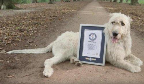 Собака с самым длинным хвостом в мире (2 фото + видео)