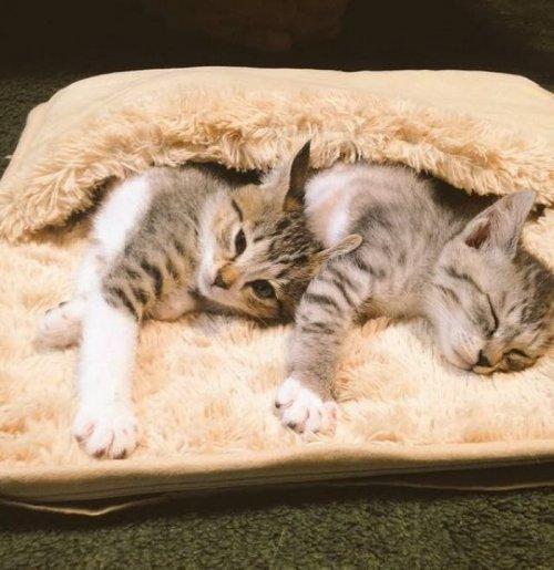 Котята оккупировали коврик с подогревом и не желают его покидать (5 фото)