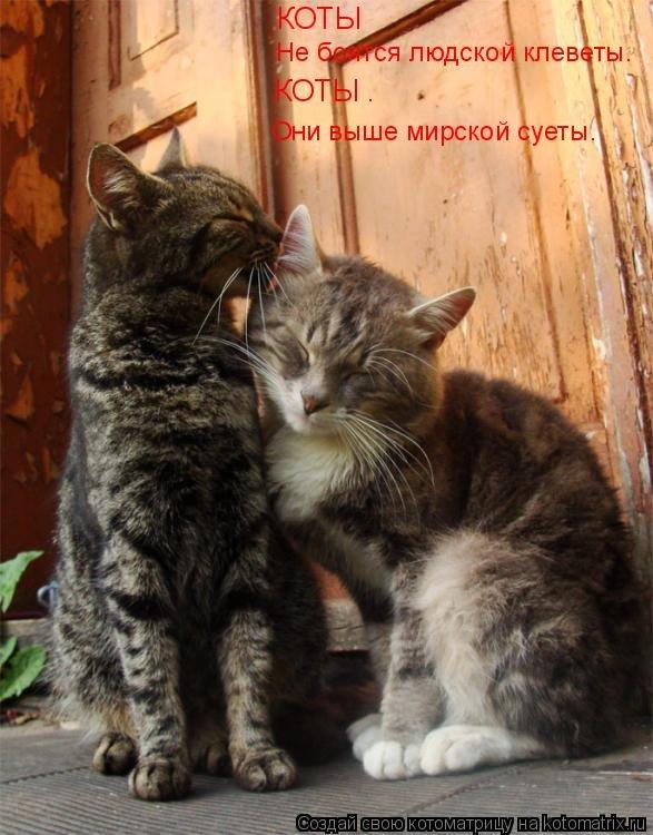Картинки с надписями кошки о любви, смешными