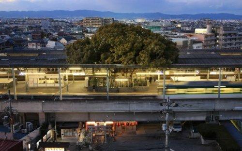 Топ-9: самые удивительные строения вокруг живых деревьев
