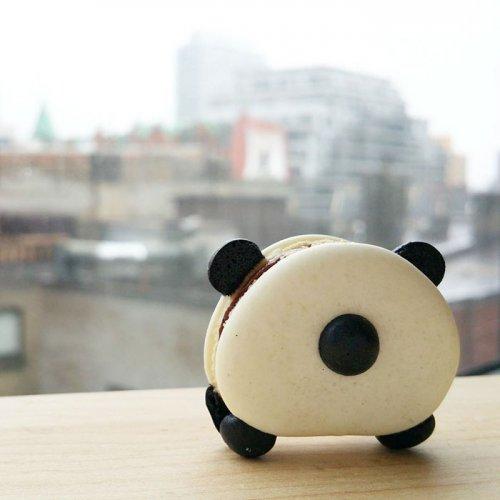 Макарони в виде панд и других животных (10 фото)