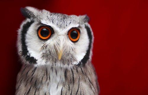 Топ-28: самые очаровательные совы интернета