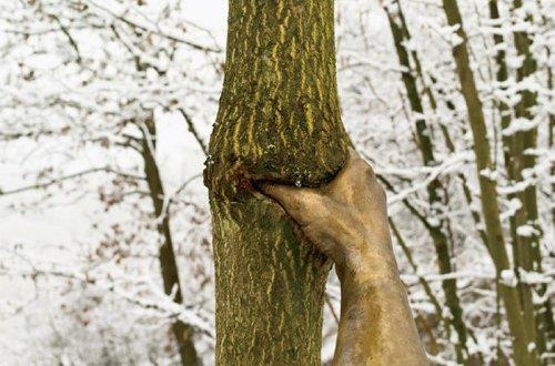 Эту бронзовую скульптуру прикрепили к дереву в 1968 году, и вот как она выглядит теперь (3 фото)