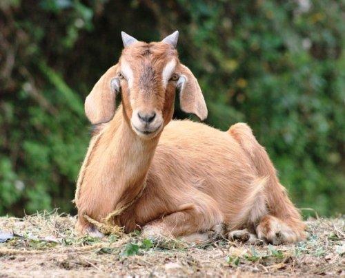 Топ-25: самые странные служебные животные в мире