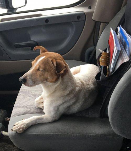 Бродячий пёс отказался идти за человеком без своего друга (2 фото)