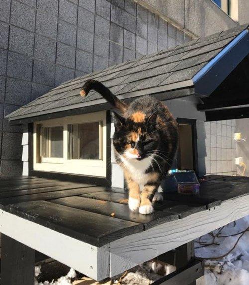 Эта кошка так часто навещала полицейский участок, что ее приютили, и сделали ей настоящий домик