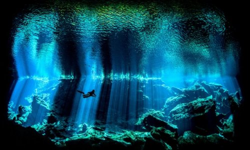 Топ-10: лучшие подводные фотографы 2017 года по версии Великобритании