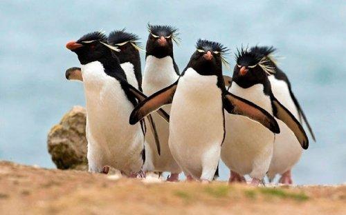 Животные, которые выглядят так, будто снимаются на обложку крутого альбома (24 фото)