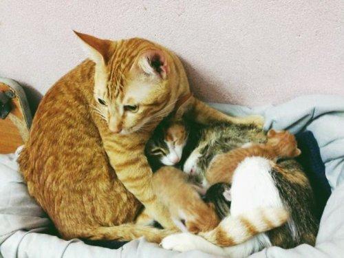 Забота и поддержка кота-отца, которая растопит ваше сердце (10 фото)
