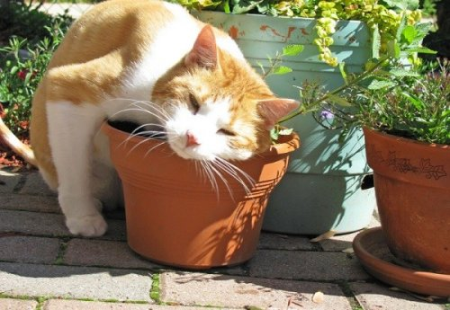 Кошки, которые любят тереться буквально обо всё (10 фото)