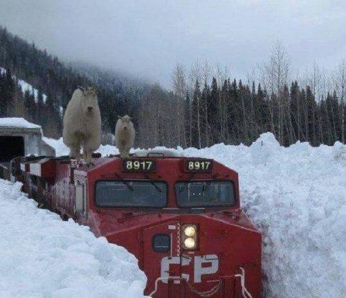 А в Канаде в это время (19 фото)