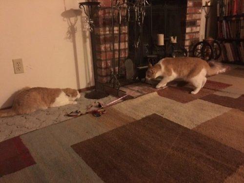 Два разделённых в приюте кота-брата встретились после того, как их хозяева познакомились самым неожиданным образом (5 фото)
