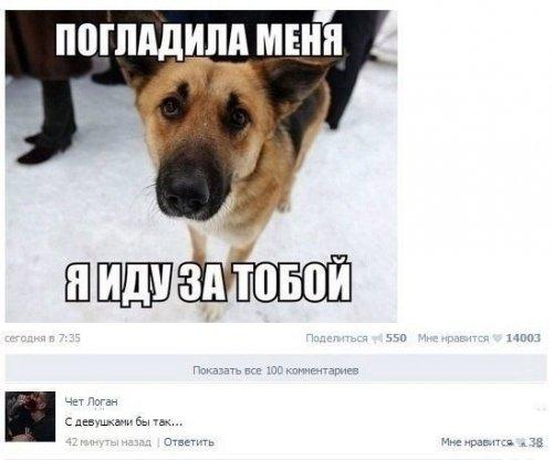Прикольные комментарии из соцсетей (23 фото)