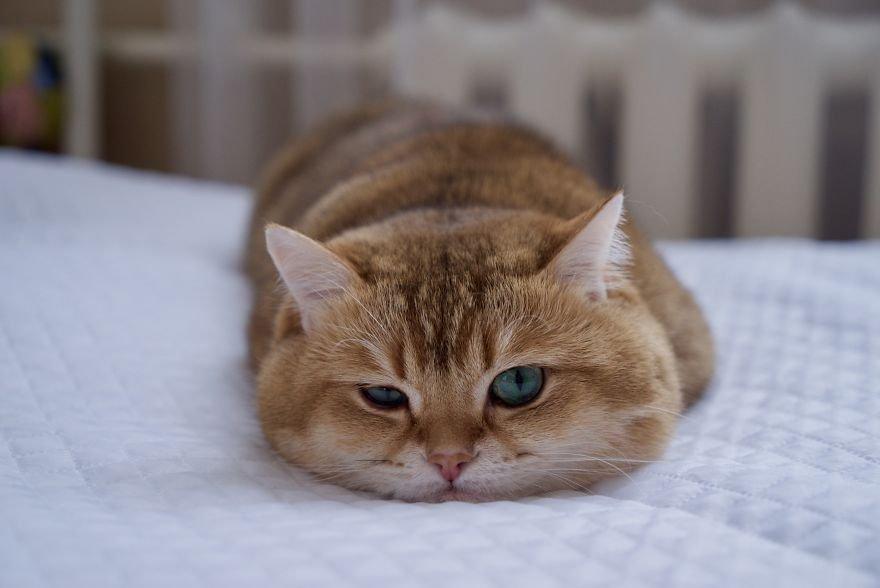 Смешные Моменты с Животными - Приколы с Котами и Собаками
