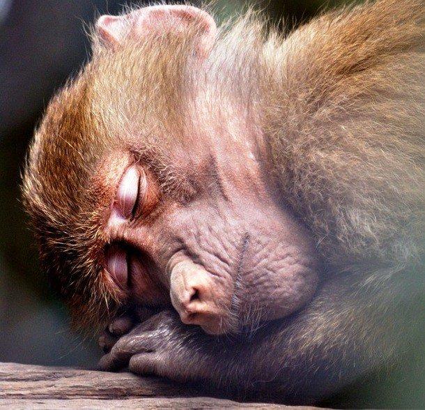 Прикольная картинка спящего, старинные открытки