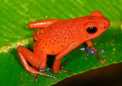 Топ-25: по-настоящему красные животные, на которых стоит взглянуть самому