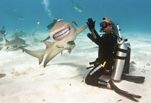 Акулы с человеческими зубами (15 фото)