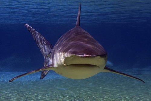 Топ-10: самые ужасающие нападения акул