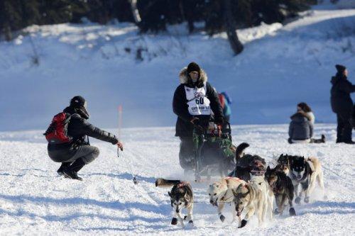 Гонки на собачьих упряжках Iditarod Dog Race 2017 (15 фото)
