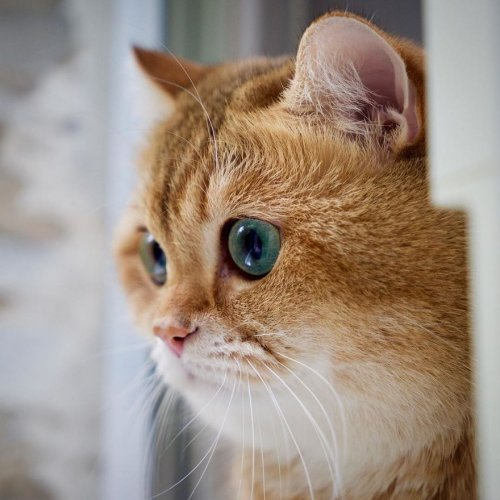 шрек котик фото