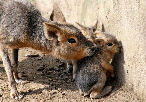 Детёныши редких животных, которых вы, вероятно, до сих пор не видели (35 фото)