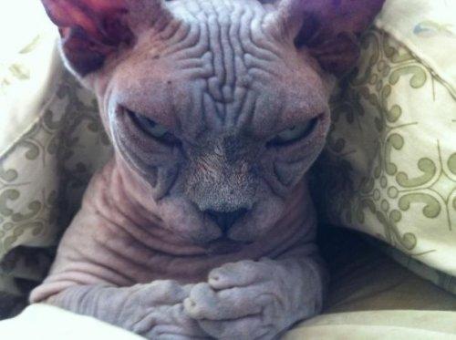 Фотографии, доказывающие, что кошки — это настоящие демоны, которые пытаются захватить этот мир! (29 фото)