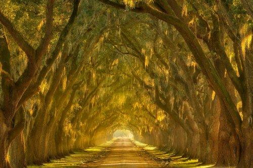 Потрясающие природные туннели, прогулка по которым похожа на сказку (22 фото)