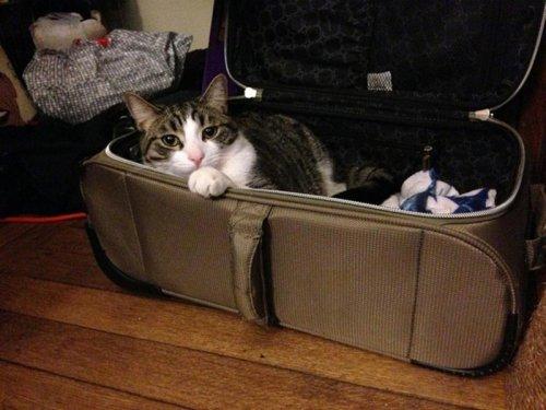 Кошки и собаки, которые хотят в отпуск вместе с хозяевами (15 фото)