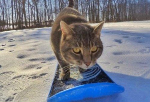 Кошки-экстремалы во время занятий любимым видом спорта (10 фото)