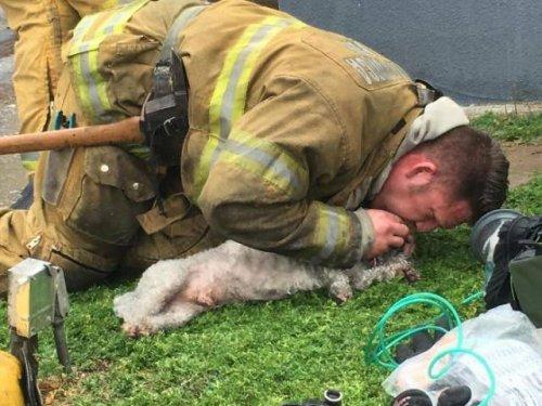 Калифорнийский пожарный доказал своё предназначение спасать жизнь каждого живого существа (8 фото)
