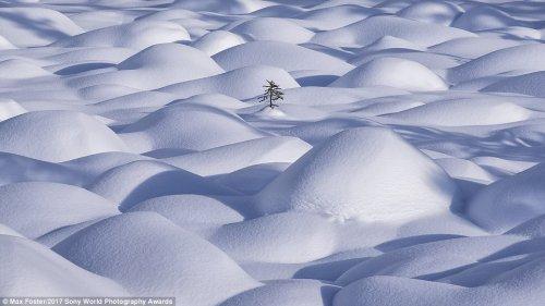Мир природы, каким вы его никогда не видели (26 фото)