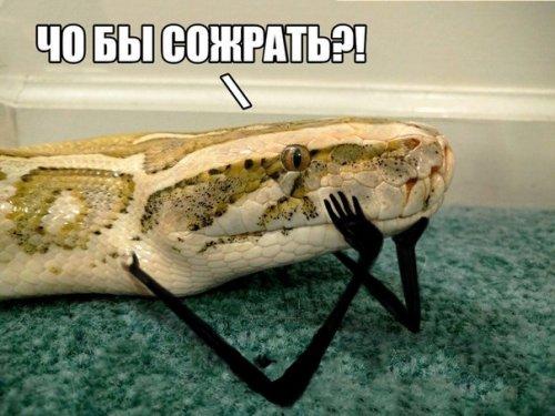 Новый смешной фотомем: змеи с руками (13 фото)