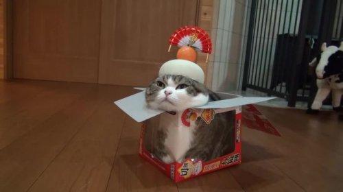 Кот Мару из Японии стал рекордсменом, как самое просматриваемое животное на YouTube (6 фото + видео)