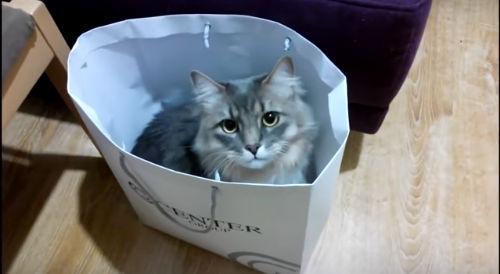 Крыса принимает душ + кот Масик и кошки (2 видео)