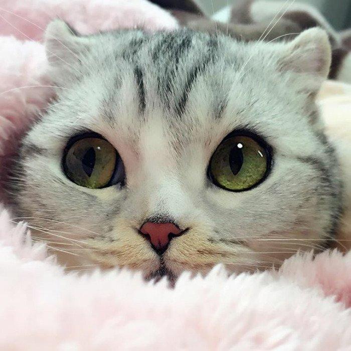 фото кошек красивых с большими глазами частности удобен тем