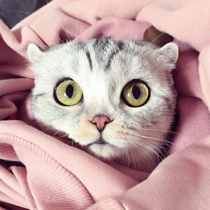 что увидите, картинки на аву для кошки нарежьте