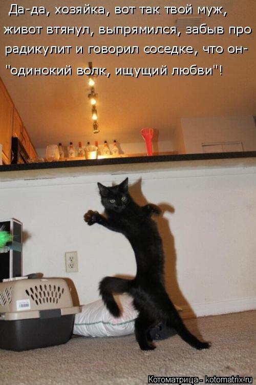 Свежая котоматрица на Бугаге (26 фото)