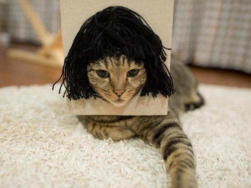 Очаровательный Мару, сидя в коробке, примеряет на себя забавные причёски (5 фото + видео)