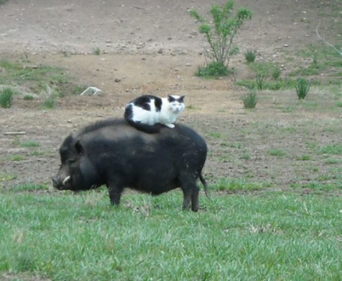 Животные, которым плевать на условности. Часть 1 (33 фото)