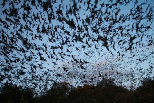 Топ-25: Невероятные факты про летучих мышей, которые вы могли не знать