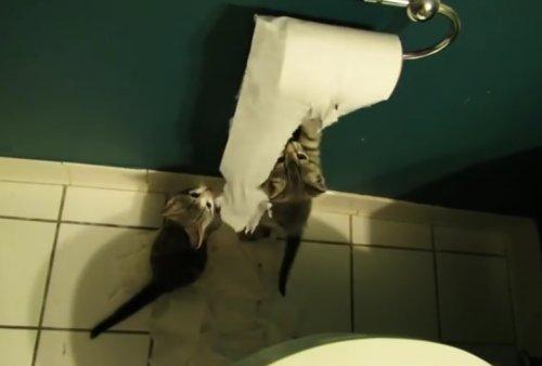 Щенки и котята, которые обожают играться с туалетной бумагой