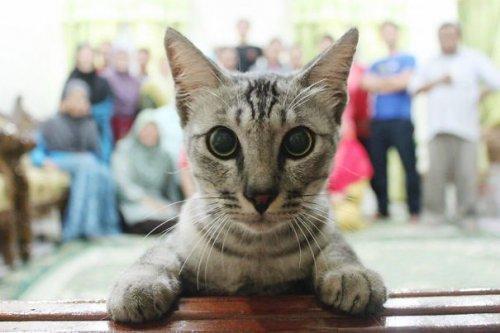 Весёлые фотобомбы с кошками (34 фото)