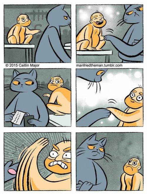 Если бы кошки и люди поменялись местами (20 фото)